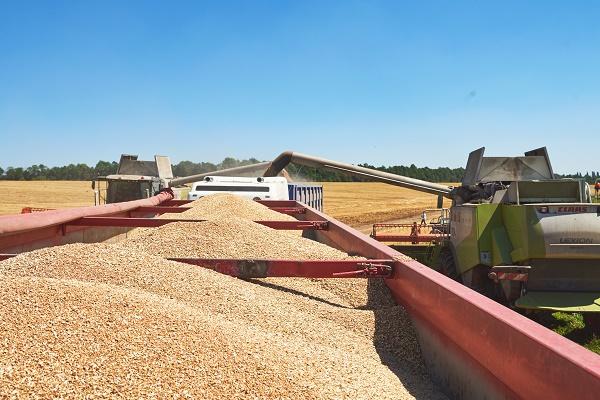 «Контінентал» зібрав урожай ранніх зернових
