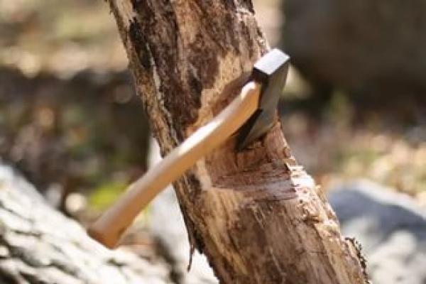 На Тернопільщині встановили суму за вирубку дерев