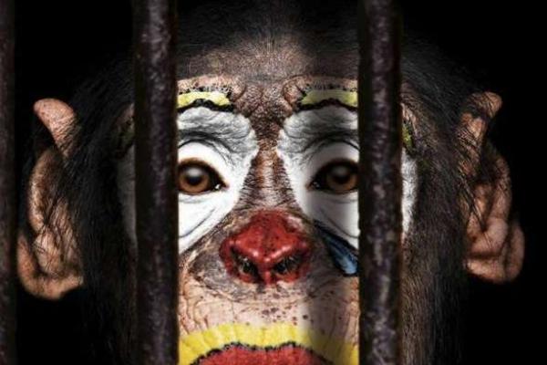На Тернопільщині заборонили пересувні цирки з тваринами