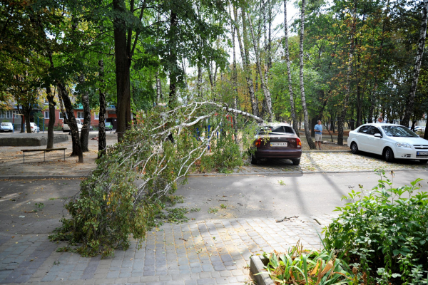 На автомобіль тернополянки впала береза (Фото)