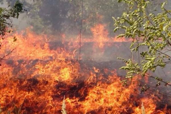 На Тернопільщині знову горять поклади торфу