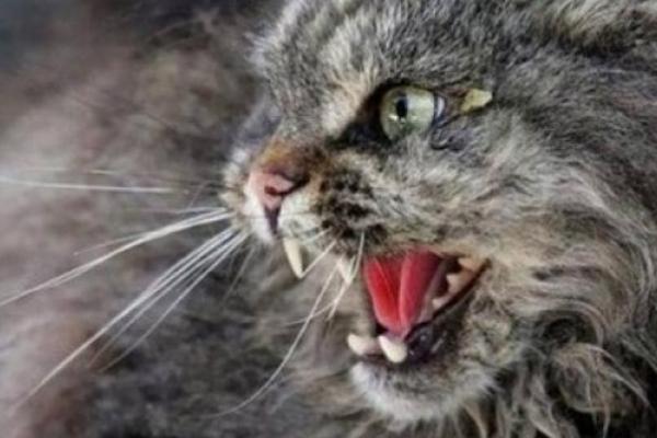 На Тернопільщині скажений кіт накинувся на господаря