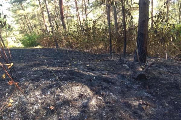 На Тернопільщині три дні гасили пожежу в лісі