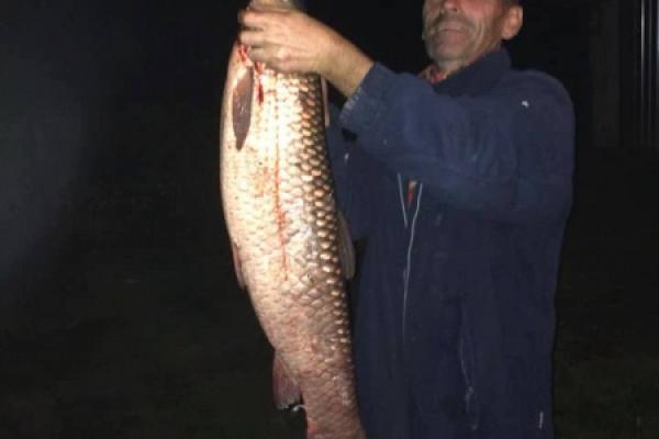 Рибалка на Тернопільщині впіймав величезну рибину (Фото)