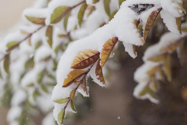 На Тернопільщину прийшов зимовий  холод