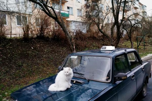 Тернопільські водії таксі відмовляються возити «селян»