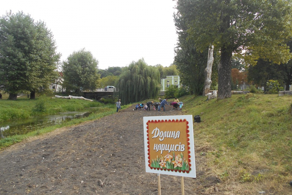 На Тернопільщині висадили долину нарцисів (Фото)