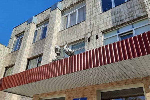 Єдина школа у Тернополі, на ґанку якої поселились лелеки