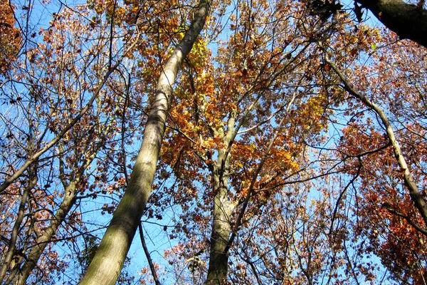 Осінній ліс дрімає в тиші
