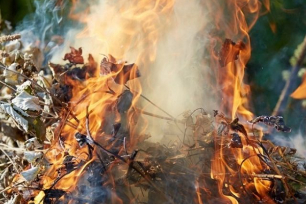 Спалювання опалого листя шкодить людині і довкіллю