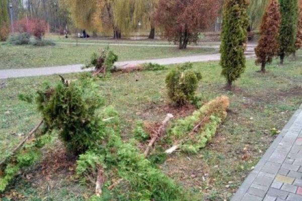 В Тернополі знищили алею пам'яті загиблих