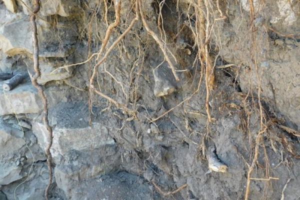 На Тернопільщині під каменями старого муру знайшли людські останки