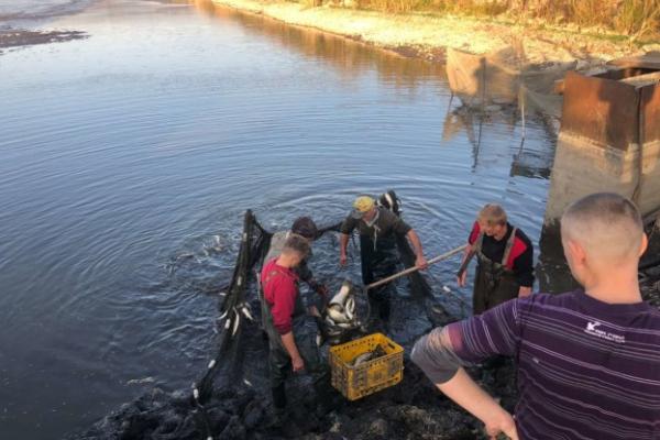 Тернопільські рибалки скинулись грішми і випустили у став хижака
