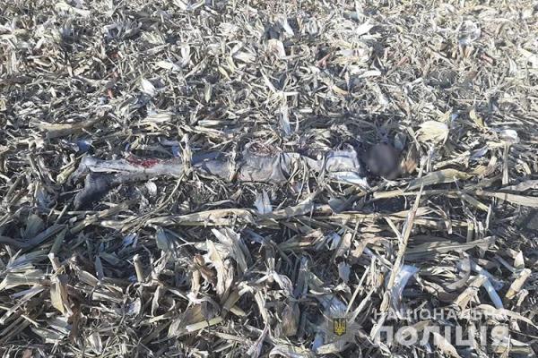 У Збаразькому районі в полі знайшли муміфіковане тіло людини