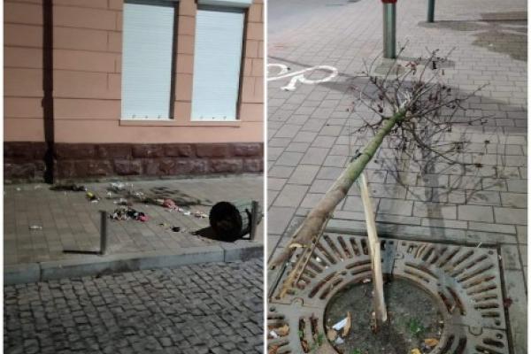 Поліція оперативно розшукала порушника, який зламав деревце на Чорновола