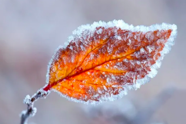 На Тернопільщині очікуються морози