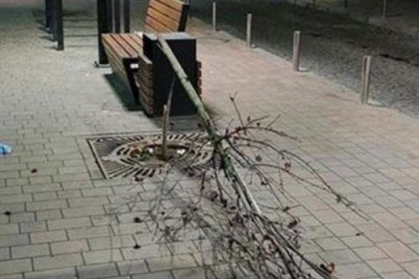 На чоловіка, який зламав дерево на вулиці Чорновола у Тернополі, поліцейські склали два протоколи