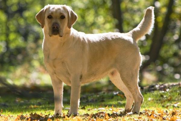 На Тернопільщині пропонують 10 тисяч гривень за собаку, яка зникла (Відео)