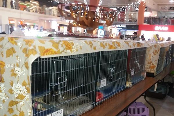 У Тернополі в «Подолянах» відбувся благодійний котоярмарок «КотоВасія» - віддавали котів у добрі руки