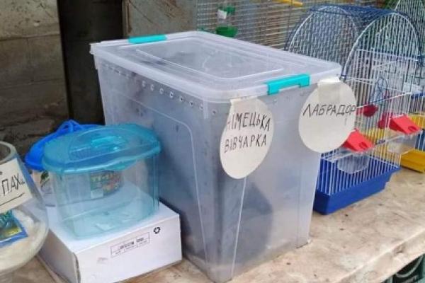 На тернопільському ринку катують тварин (Фото)