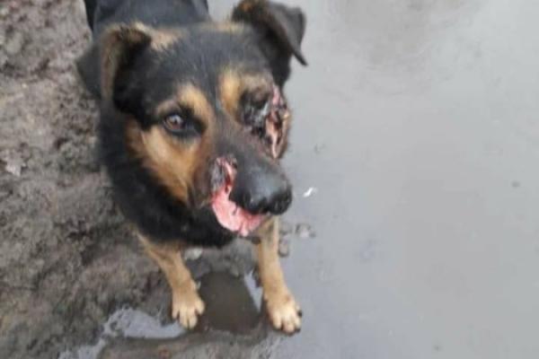 У Тернополі тварини страждають від «розваг» садистів