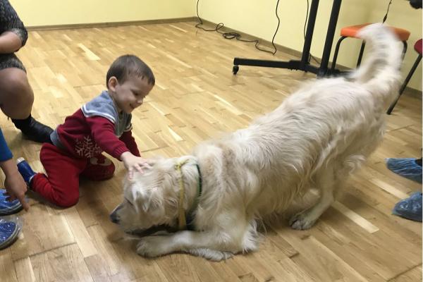 Собака-терапевт: у Тернополі активно впроваджують каністерапію