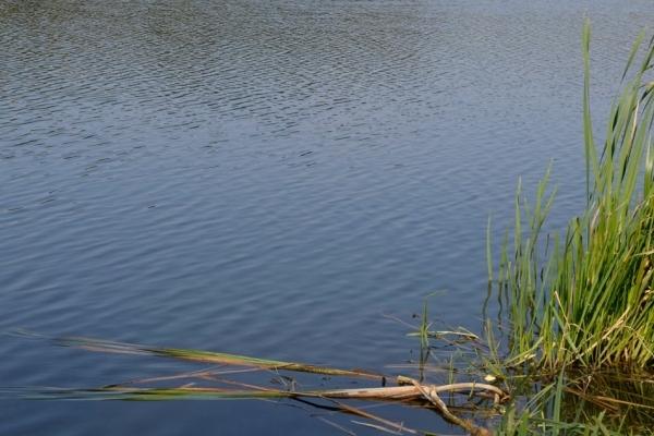 «Замість городу — став»: на Тернопільщині люди самовільно викопують водойми