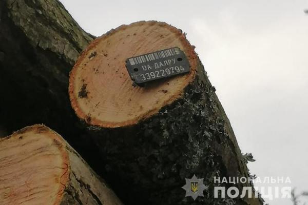 На Тернопільщині фіксують випадки незаконної вирубки лісових насаджень