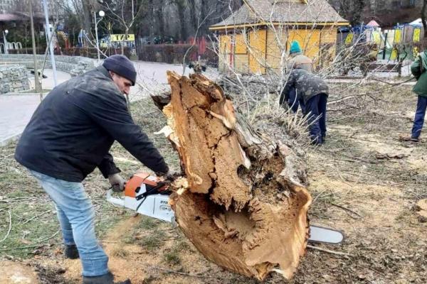 Тернопіль: у  парку ім. Тараса Шевченка обрізають дерева