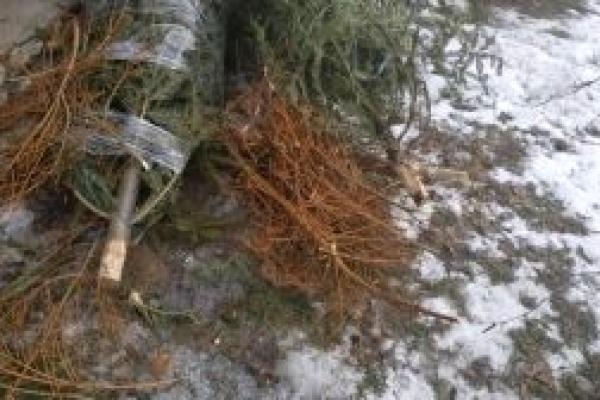 Тернопіль: містян просять не викидати ялинки в сміттєві контейнери
