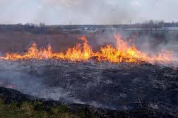 На Тернопільщині масштабні пожежі