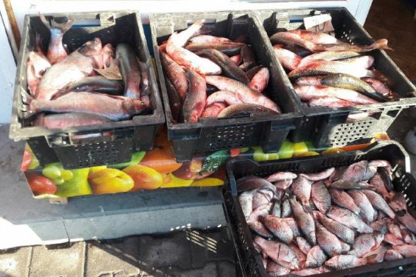 Тернопіль:  інспектори виявляють незаконний  збут риби