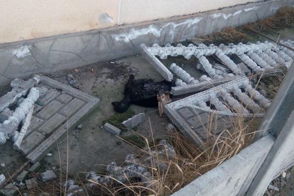 У Теребовлі посеред міста можна натрапити на мертвих тварин