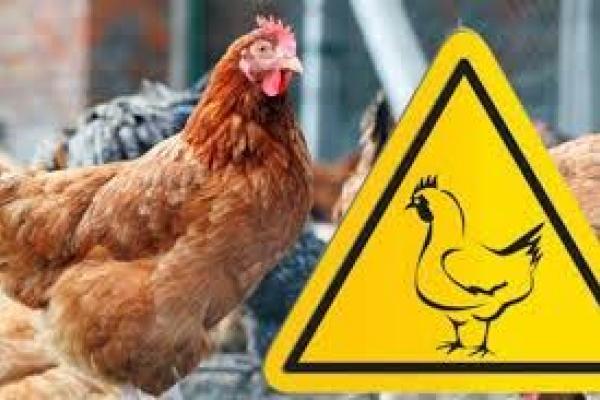 На Тернопільщині  намагаються не  допустити поширення пташиного грипу