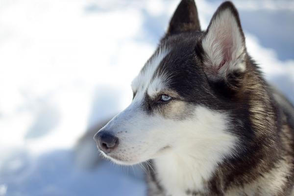 У Тернополі 9-річного вихованця дитячого будинку покусала собака