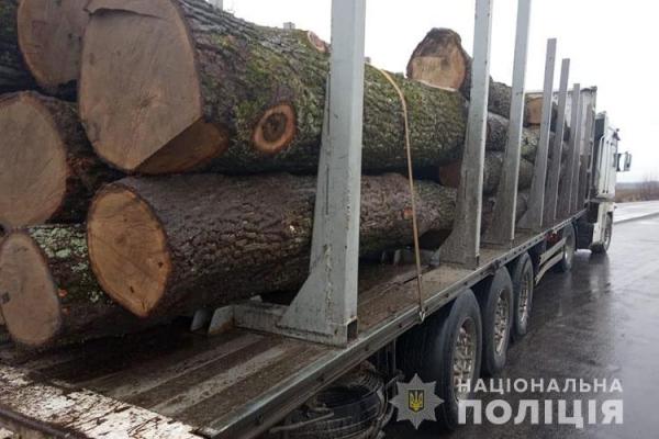 На Тернопільщині продовжують розкрадати ліс