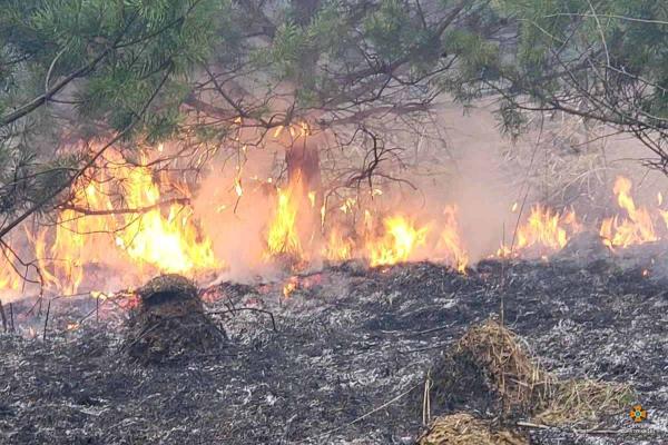 «Полум'я розповсюдилось в напрямку селища»: на Тернопільщині масштабна пожежа