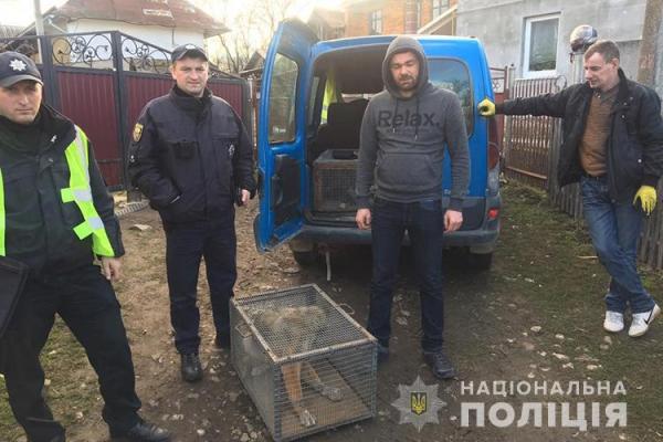 «Жорстоке поводження з твариною»: на Тернопільщині вирішили резонансну справу