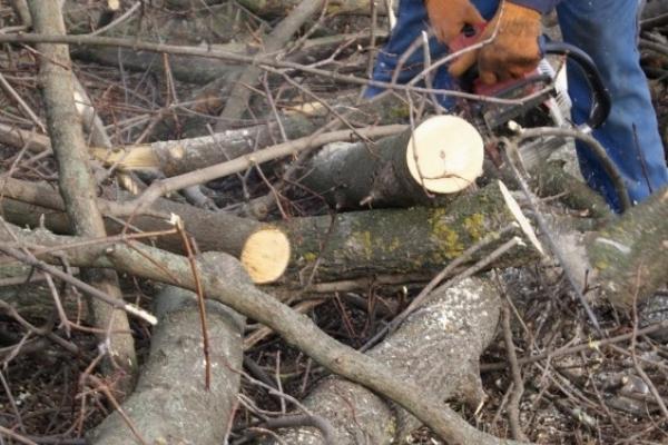 У лісопосадці на Тернопільщині знайшли мертвого чоловіка
