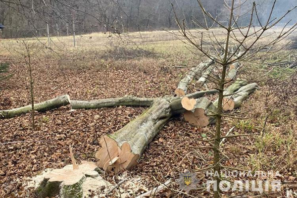 У Кременецькому районі дерево вбило чоловіка
