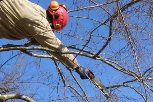 На Тернопільщині загинув чоловік під час заготівлі деревини