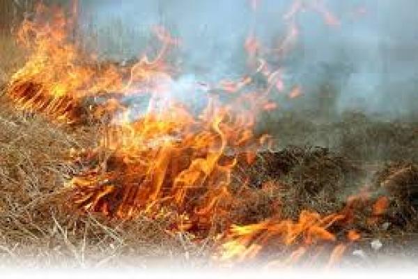 На Тернопільщині жінка згоріла на власному городі