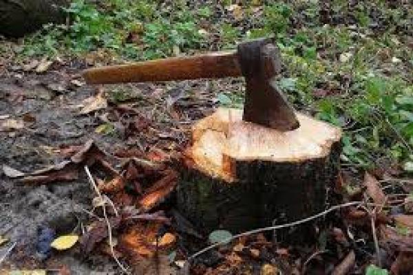 Тернопільщина: двоє чоловіків зрізали деревину у лісосмузі