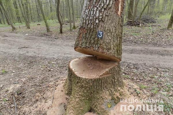 На Тернопільщині чоловіки зрізали дороговартісні породи дерева