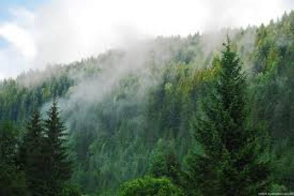 На Тернопільщині людям заборонили відвідувати ліси