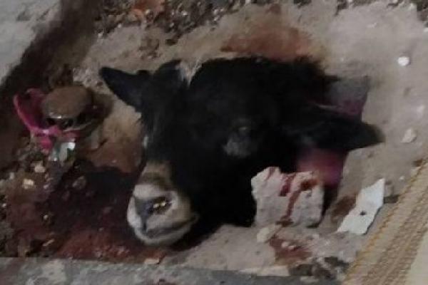 Голова ягняти у храмі і сліди крові: На Борщівщині завелись сатанисти?