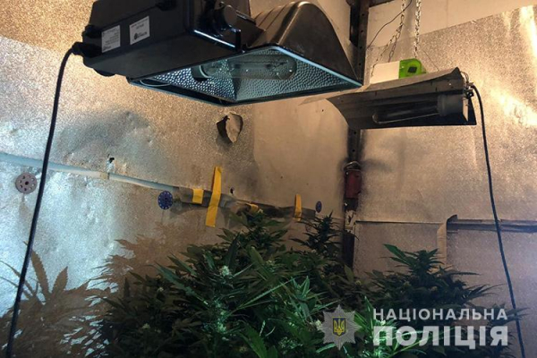 Мешканець Тернопільщини створив конопляну теплицю у своєму гаражі