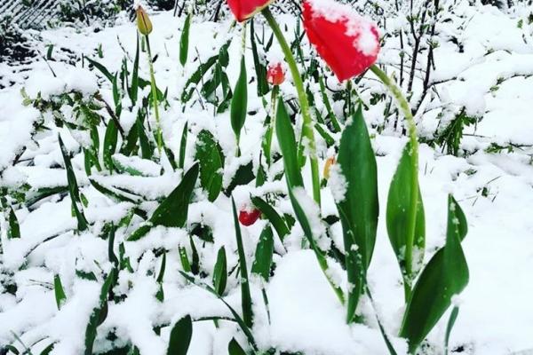 Шаленна стихія захоплює Європу. Таких снігопадів не було навіть зимою (Фото)
