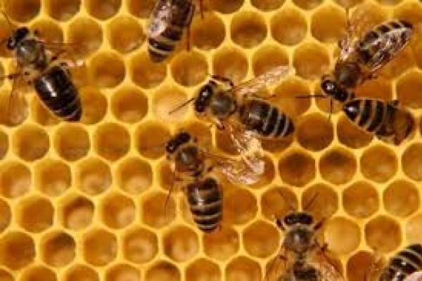 На Тернопільщині молодий чоловік загинув від укусів бджіл