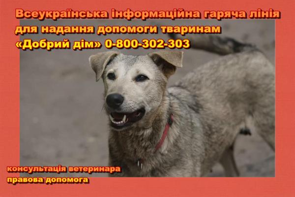 Отримати консультацію ветеринара чи юриста зможуть власники тварин та зоозахисники за телефоном гарячої лінії